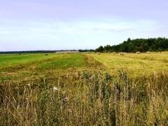 Снять участок под сельское хозяйство